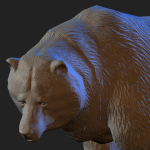 bear 3d model normal bump applied