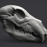 WIP 3d bear scull. Keyshot render