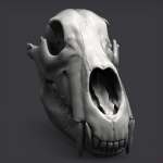 WIP 3d bear scull Keyshot render