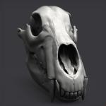 WIP 3d bear scull Keyshot render