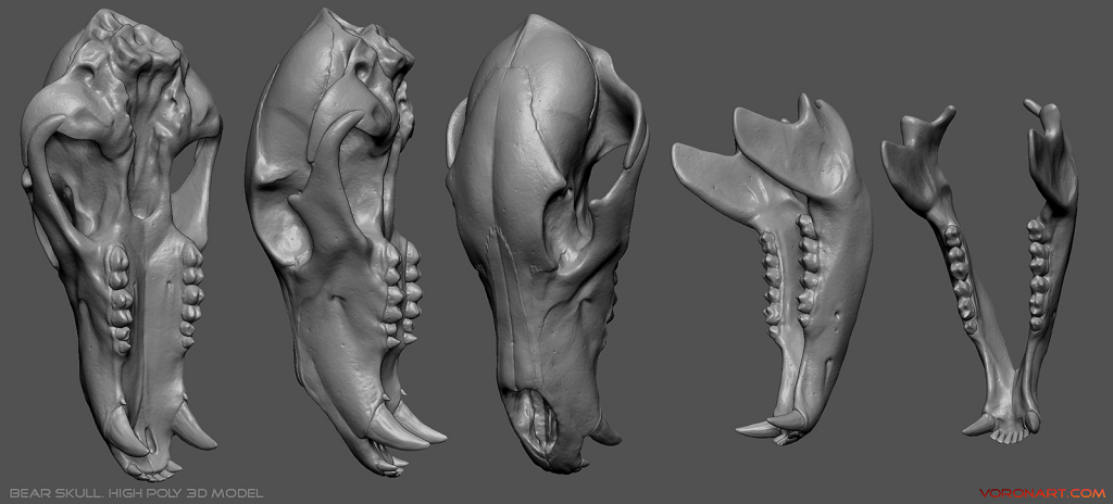 bear skull high poly 3d model