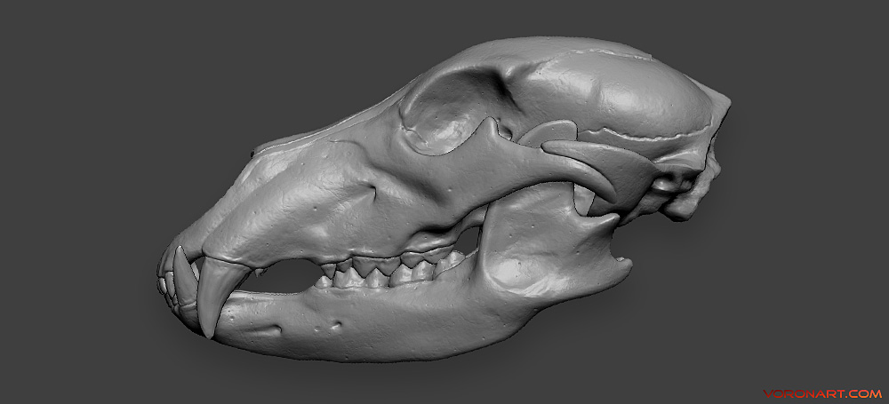 bear scull high-poly-3d model