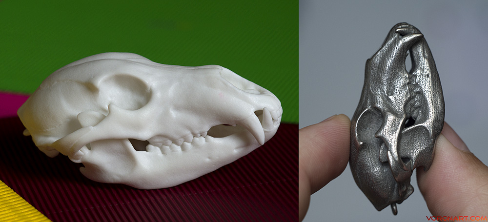 Bear skull 3d printed. Plastic and Stainless steel