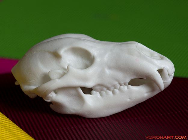 bear-skull-jointed-plastic-3d-print-01