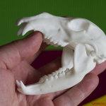bear skull polyamide 3d-print