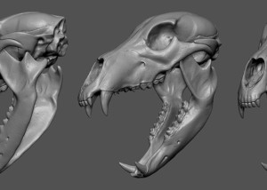 Buy bear skull digital 3d model for jewelry design, 3d printing