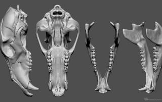 bear skull high poly 3d model for 3d printing, CNC milling. STL, OBJ
