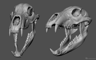 bear skull high poly 3d model for 3d printing, CNC milling. STL, OBJ. open mouth