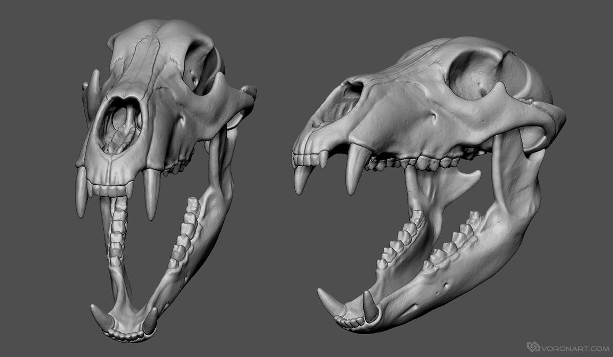 Buffalo For Sale >> Bear Skull 3D model for sale