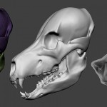grizzly, bear skull base-mesh. Zbrush ZTL-file, MAX, FBX, OBJ, STL files