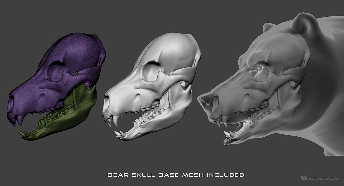 Bear, Grizzly Base-mesh 3d model. ZTL, MAX, FBX, OBJ, STL