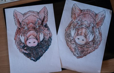 wild-boar-coloring-page-from-3d-sculpt-02