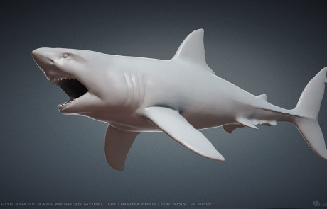 Great White Shark Base Mesh 3d model. UV unwrapped High polygon and Low polygon