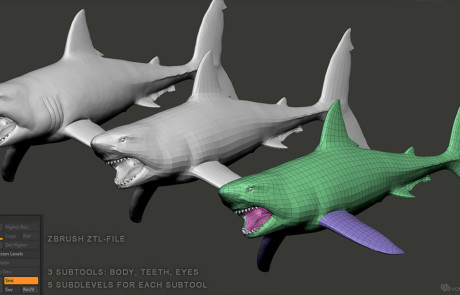 Great White Shark Base Mesh 3d model, Zbrush ZTL file