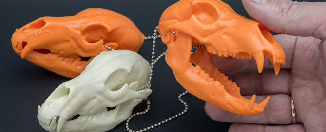 Bear skull replica in plastic. 3d print in PLA plastic
