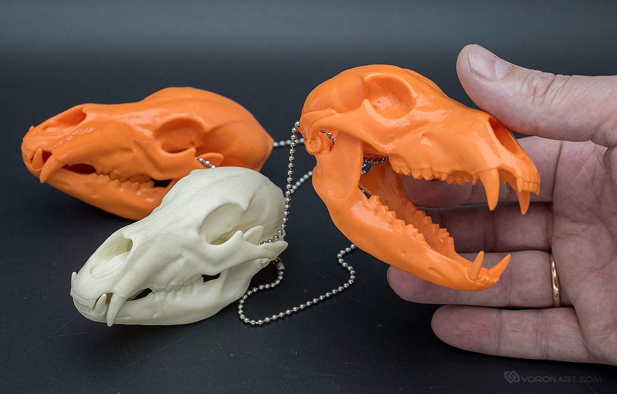 Bear skull replica in plastic and metal. Through 3d printing