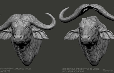 Cape Buffalo african animal head sculpture 3d model single mesh and separate horns.