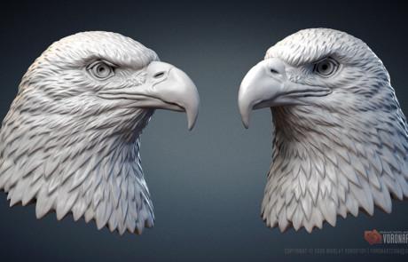 Bald Eagle head sculpture 3d model. 3d printable