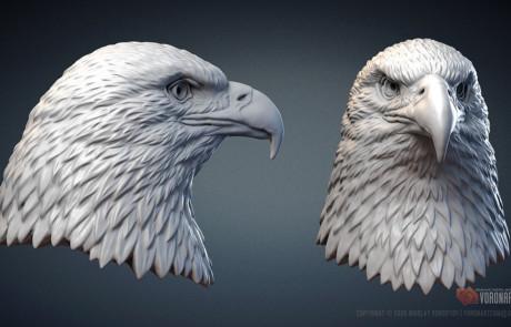 3d printable Bald Eagle head 3d model sculpting in zbrush