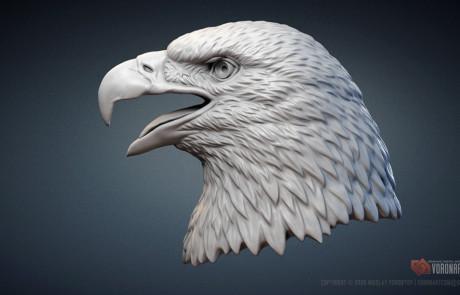 Bald Eagle head digital sculpture. Bird of prey portrait